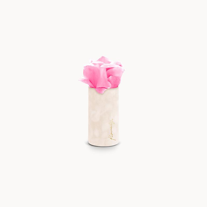 róża w pudełku