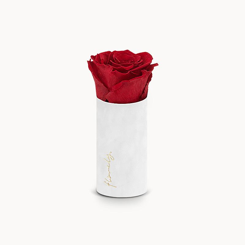 wieczna róża