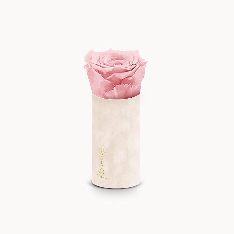 różowa wieczna róża