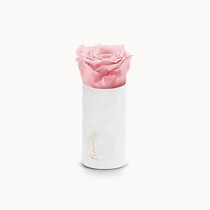 Pudroworóżowa róża