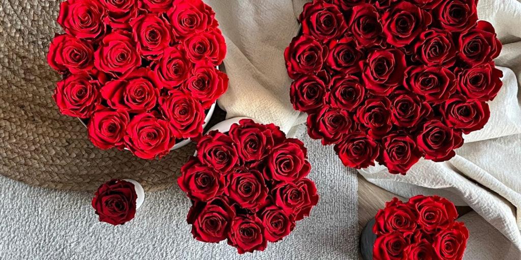 wieczne róże jak dbać